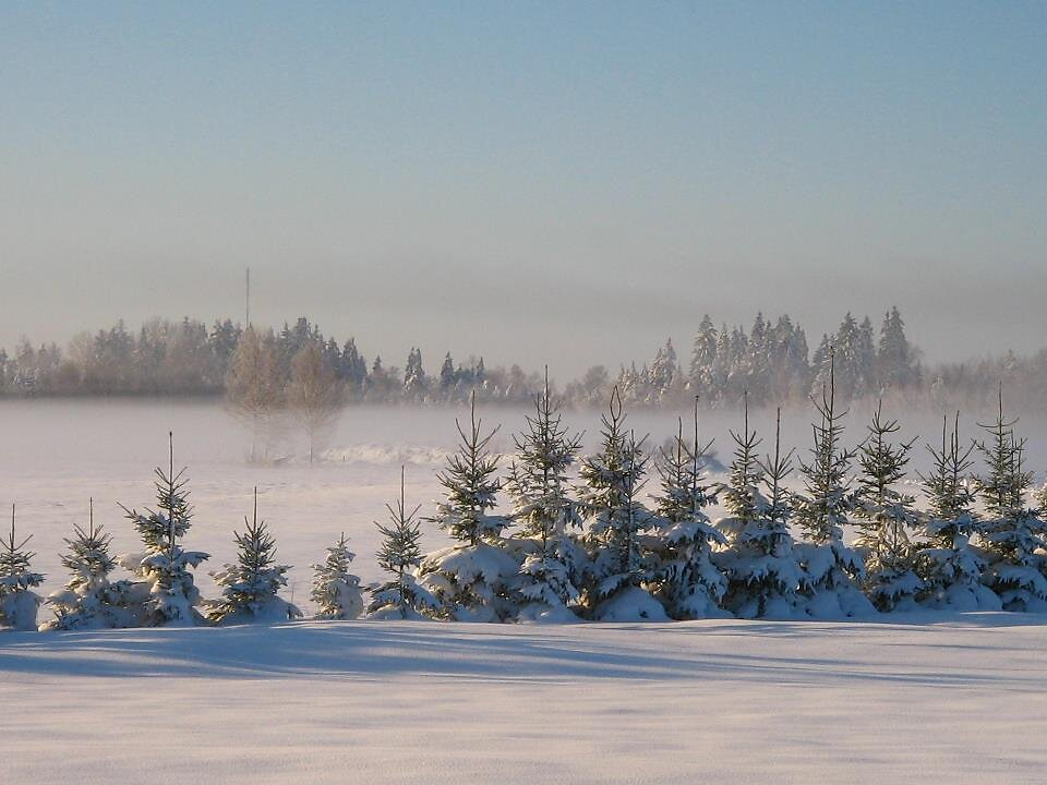 Lumine kuuserida